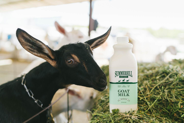 goat milk vs cow milk